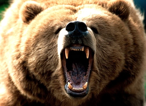 «Медведи» держат фронт