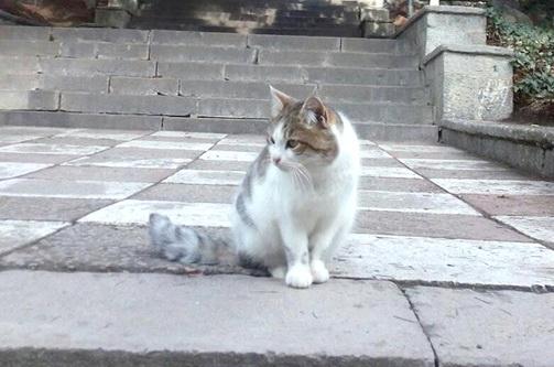 Никитский ботсад запустил конкурс на лучшее фото или картину с обитающими в саду кошками