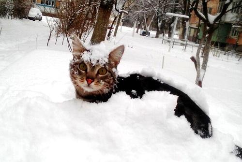 В русском Крыму и зима стала русской