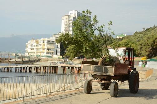 Каменные дубы украсят набережную Никитского пляжа