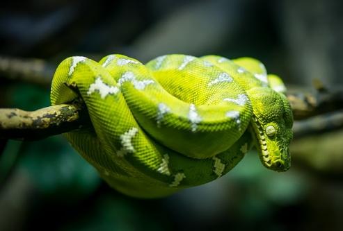 Змея на перилах мостика