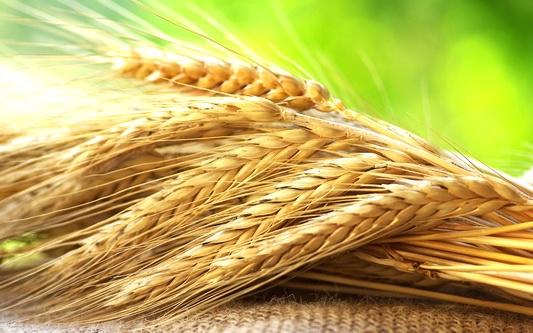 Уборка хлеба в разгаре