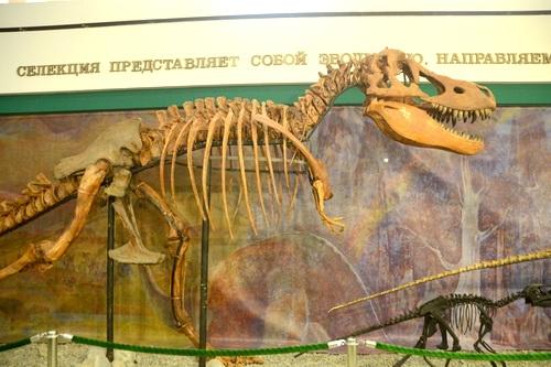 В Крыму есть всё! И динозавры тоже