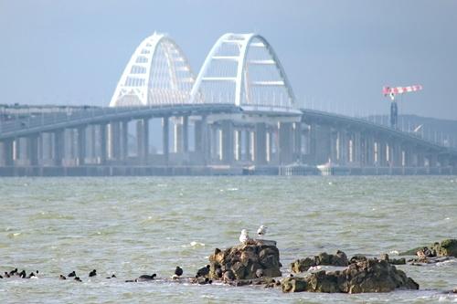 Крымский мост — где птицы находят приют 0 (0)