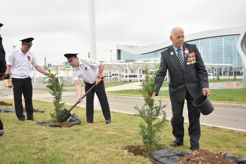 Аллея памяти героев Великой Отечественной войны высажена в аэропорту 5 (1)