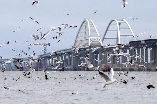 Экологи установили кормушки для птиц рядом с Крымским мостом 0 (0)