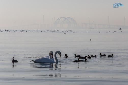 Ученые наблюдают за дельфинами в районе строительства Крымского моста