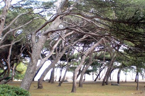 Форос, несомый ветром