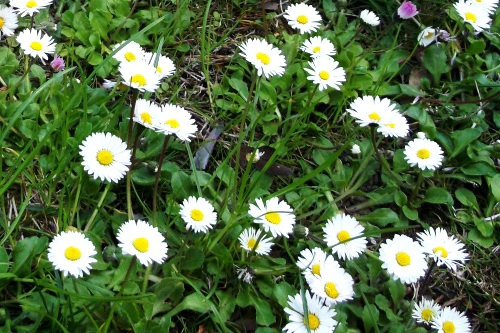 Белый цветок в Ливадии