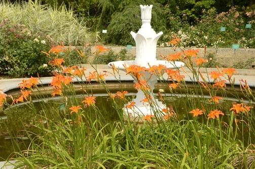 Чем радует нас Никитский сад в первый день второго месяца лета?