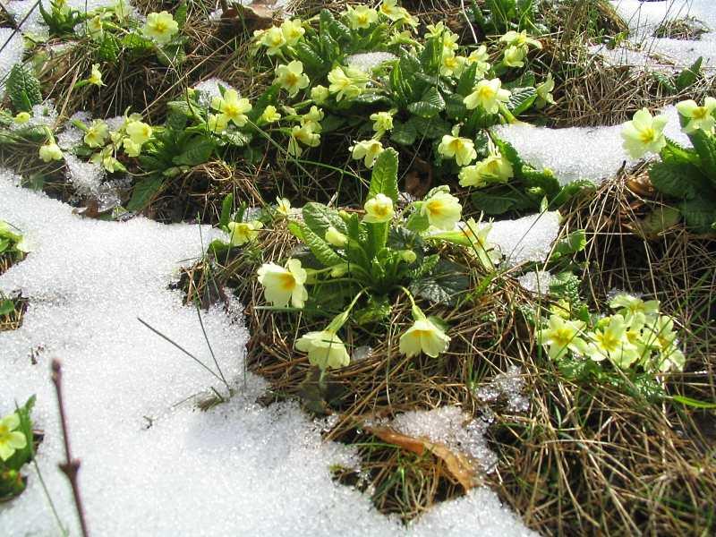 Апрельская зима