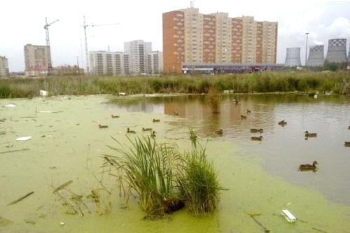 Киевское болото