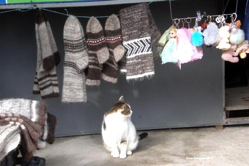 Не все котам Масленица…