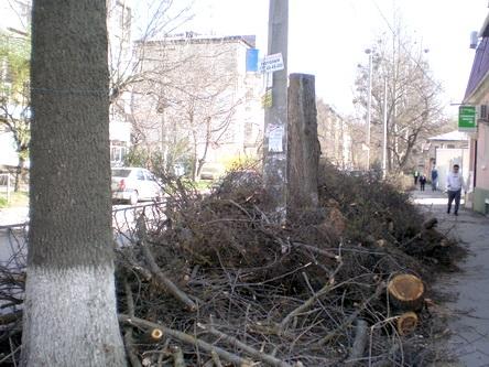 Тюрьма деревьям, рай апартаментам 0 (0)