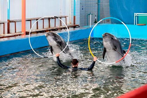 Наш друг, дельфин