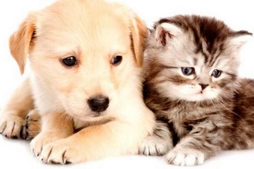 Собаки в городе: кому радость, кому зло