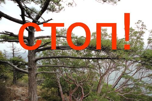 Отныне в лес — ни ногой! 5 (1)