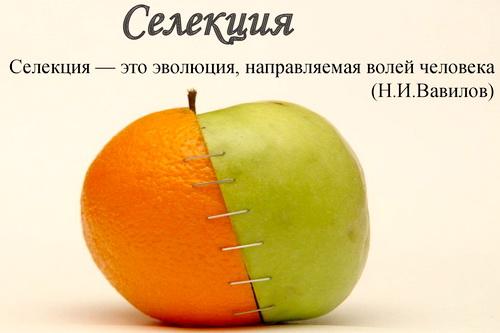 Зеленский и его партия хотят заняться селекцией своего народа? 5 (4)