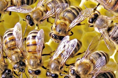 Пчелы – это не только мёд 5 (2)