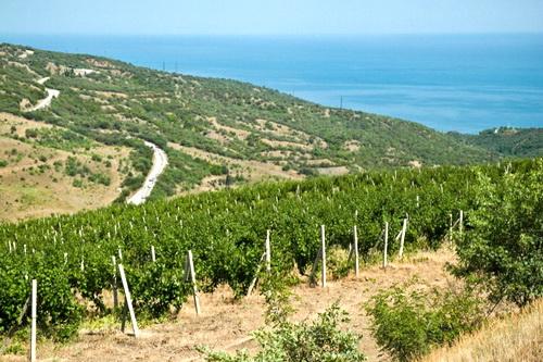 Закон о виноградарстве и виноделии пора дорабатывать 0 (0)