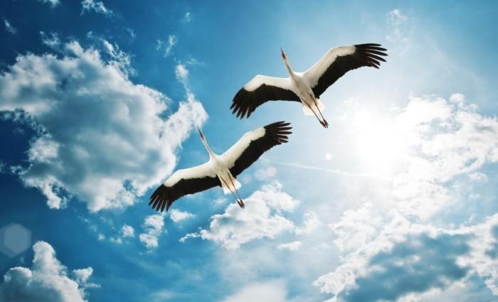 Белые птицы в синем небе