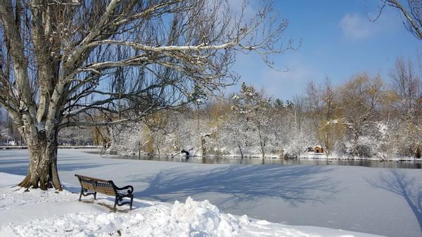 Тень деревьев на замерзшем пруде в Гагаринском парке — редкий факт в Симферополе. Фото Л.П. Юрчишко