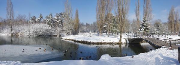Пруд в Гагаринском парке. Фото Л.П. Юрчишко
