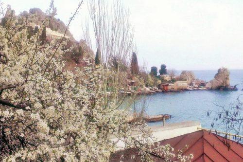 Крымская сосна как объект вдохновения