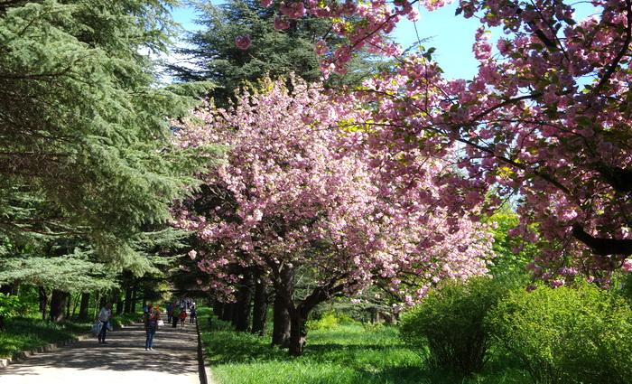 То ли весна, то ли лето