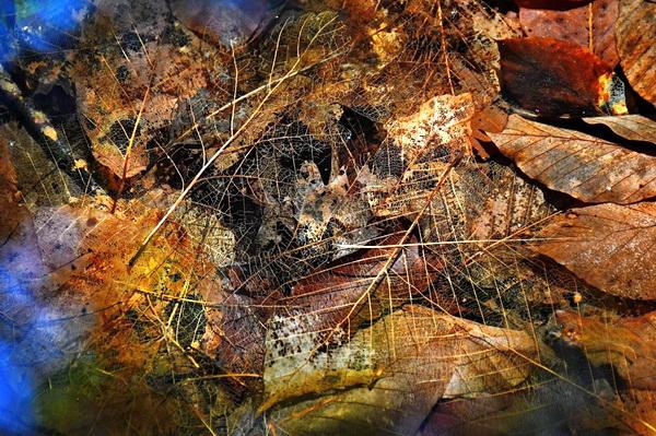 Прошлогодние листья на дне ручья