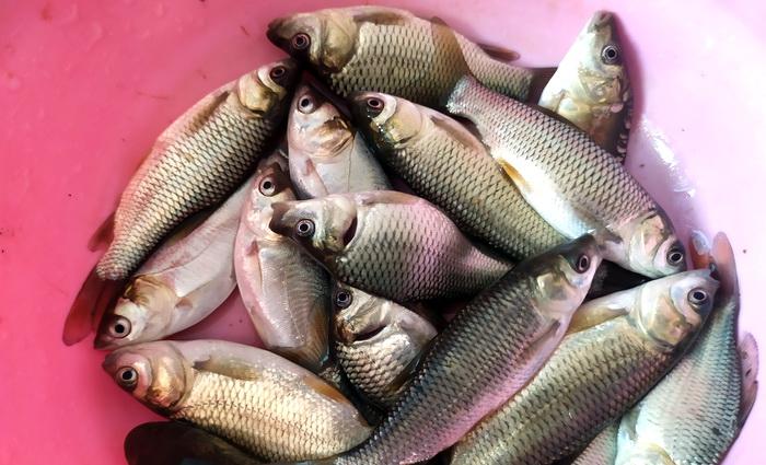 Даже рыбе в Крыму стало лучше жить