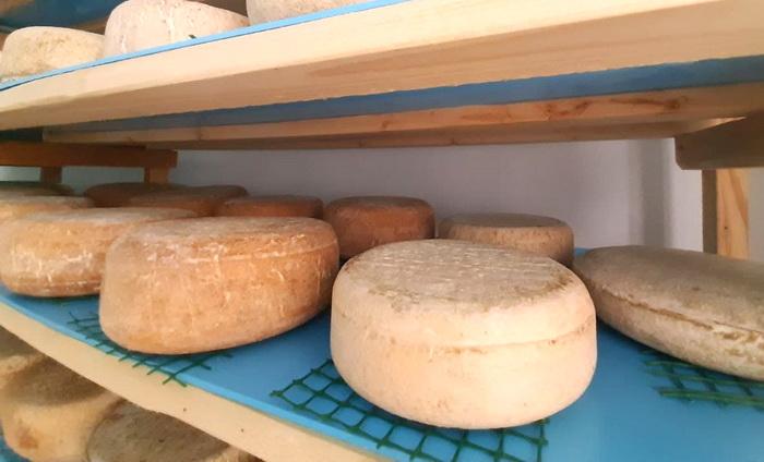 В Крыму расширяется производство твердых сыров